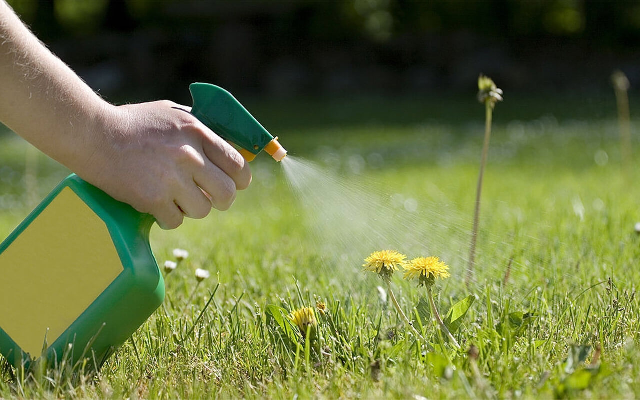 Best Garden Sprayers Reviews